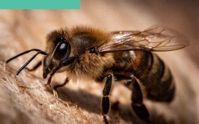 Growing Hemp Can Help Save Bees!