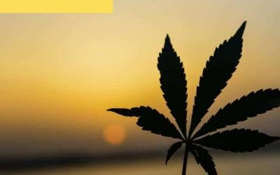 Researchers Announce the Discovery of Two New Cannabinoids
