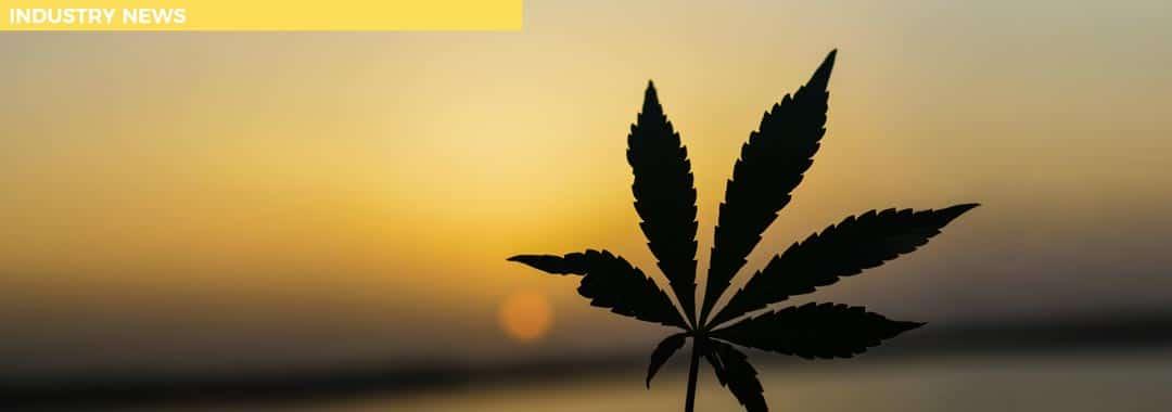 Two New Cannabinoids