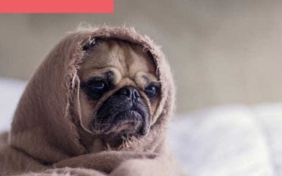 Dog Anxiety: The Top 5 Triggers & Remedies